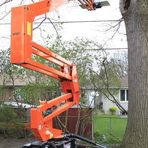 removal-of-a-huge-hollow-oak-in-toronto04