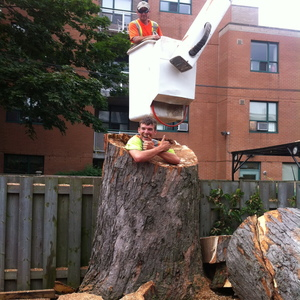 removal-of-a-large-dangerous-maple-toronto-04