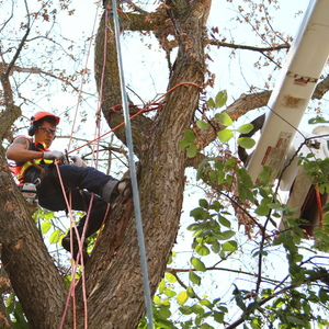 removal-of-a-large-dead-elm-003