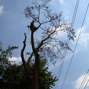 removal-of-a-large-dead-elm-008