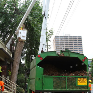 removal-of-a-large-dead-elm-010