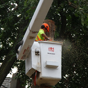 removal-of-a-large-dead-elm-011