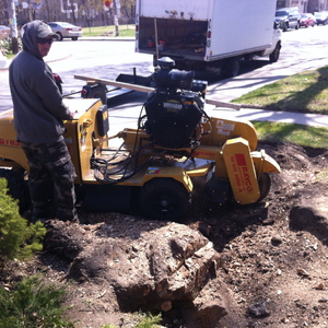 stump-grinding-stump-removal-in-toronto