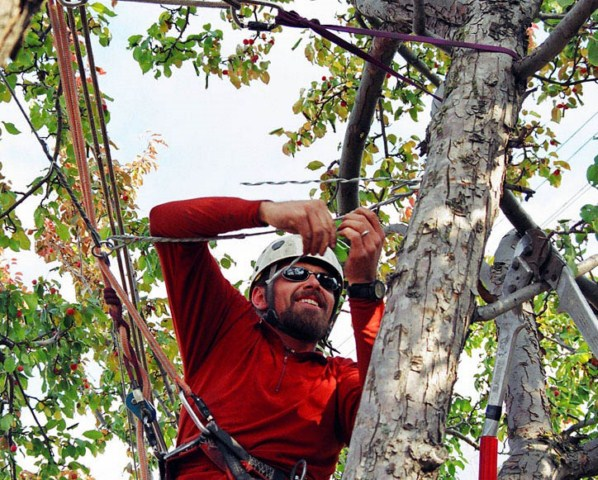 Arborist and tree care services in Mississauga