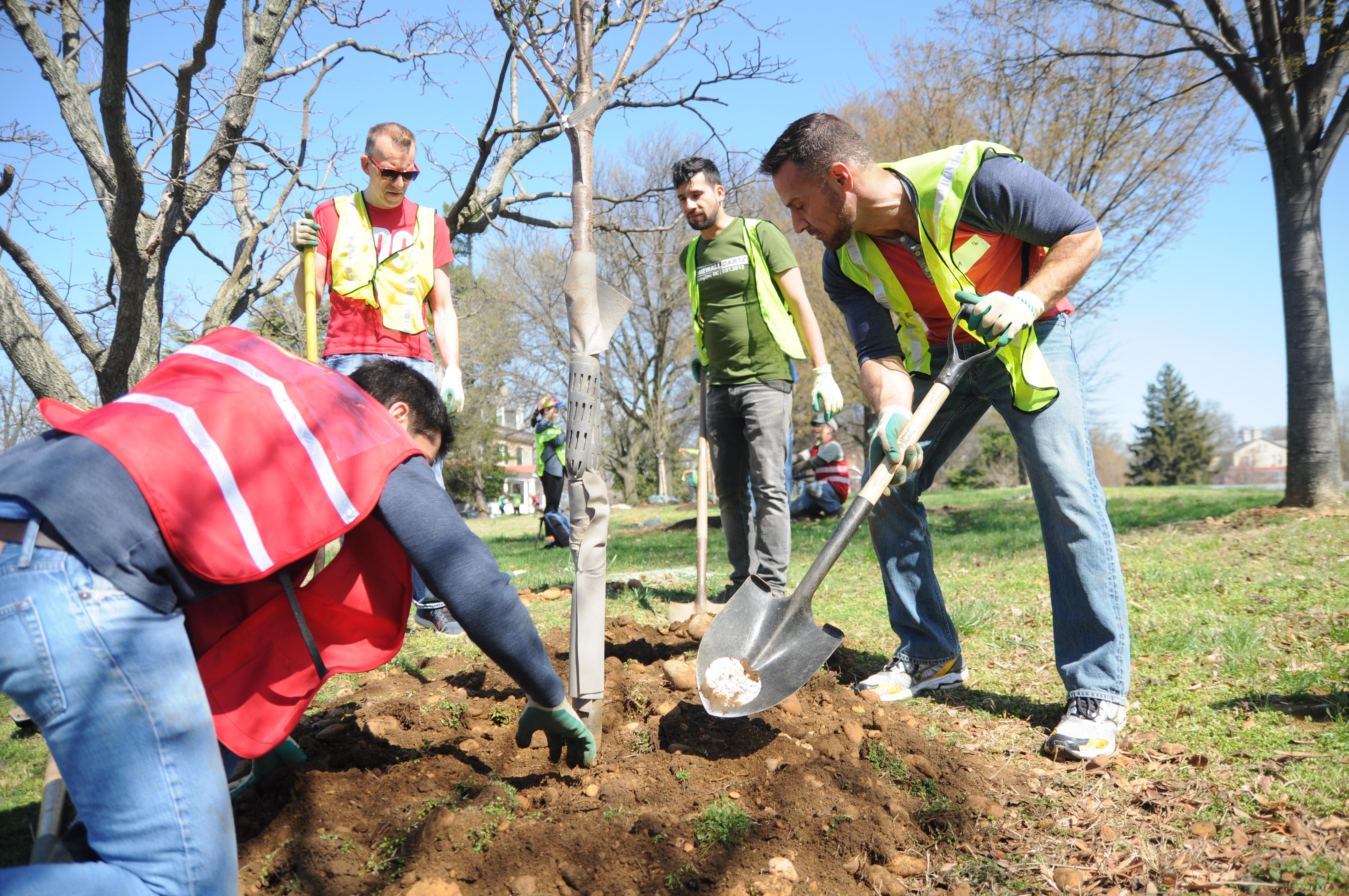 Preparation for Spring Tree Planting | Tree Doctors Inc