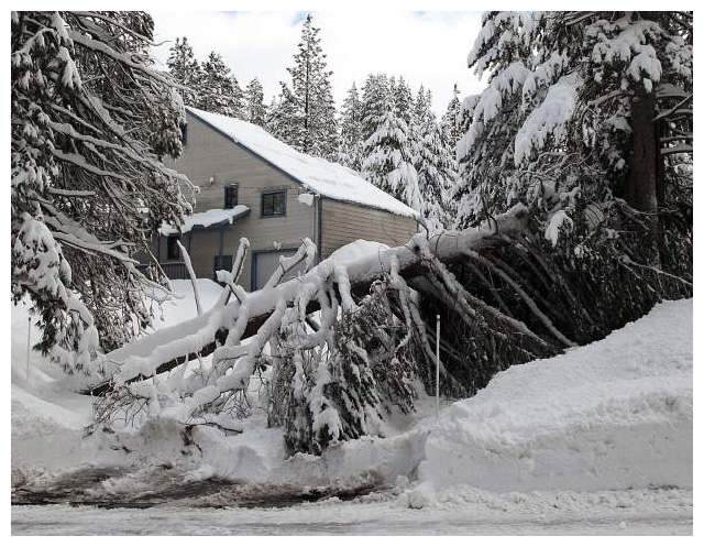 Protecting Trees from Snow, Ice and Salt Damage