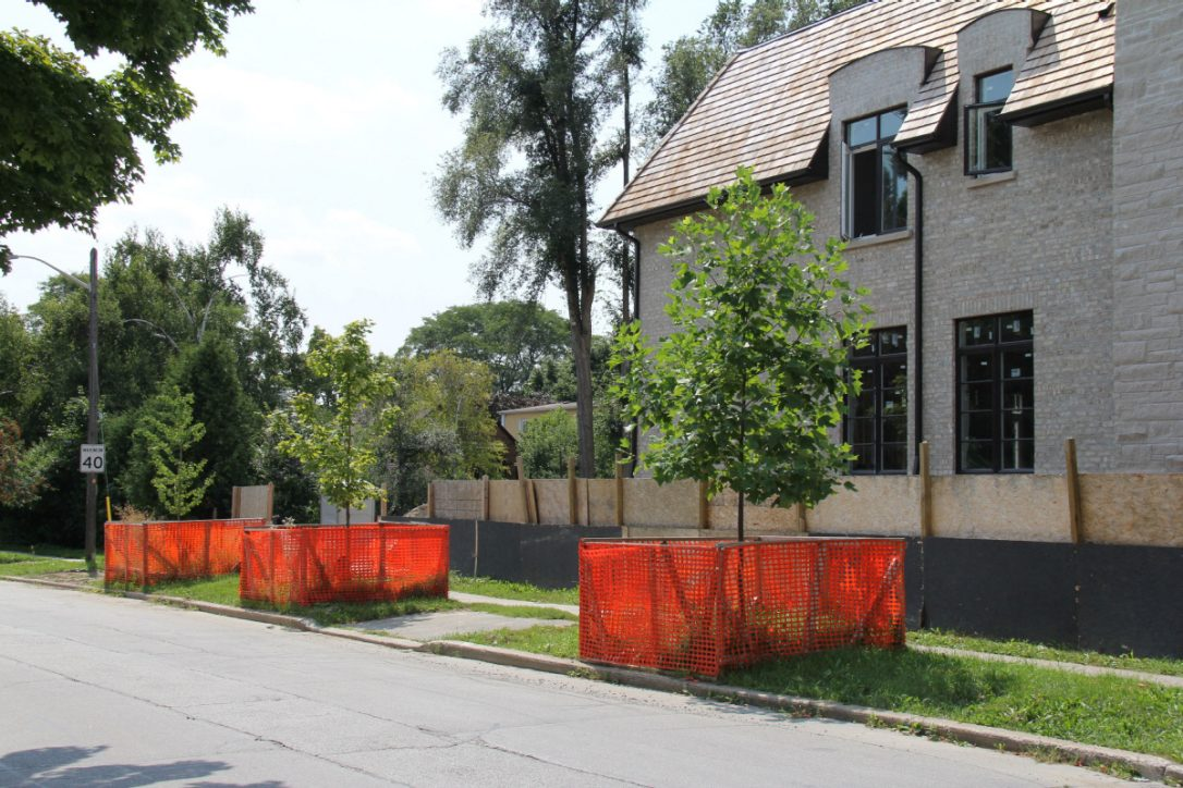 Arborist Services for Toronto Architects and Constraction Companies