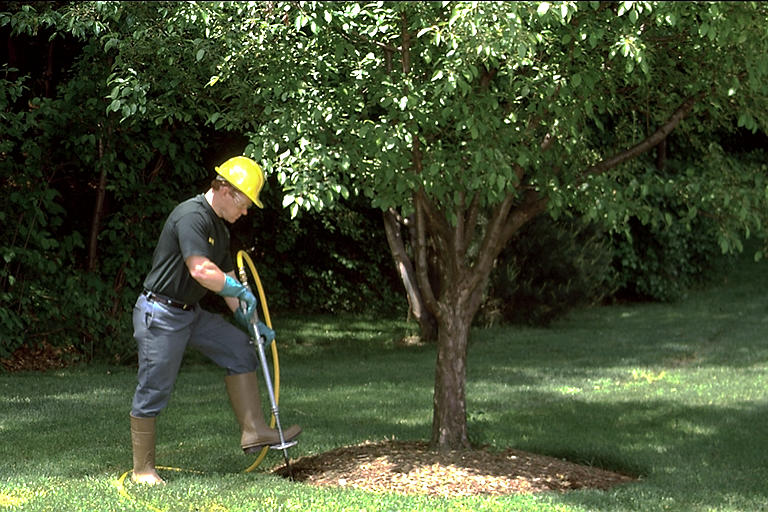 Spring Tree Fertilizing in Toronto