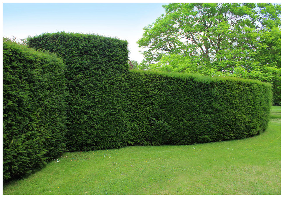 Hedge and Shrub Trimming in Toronto
