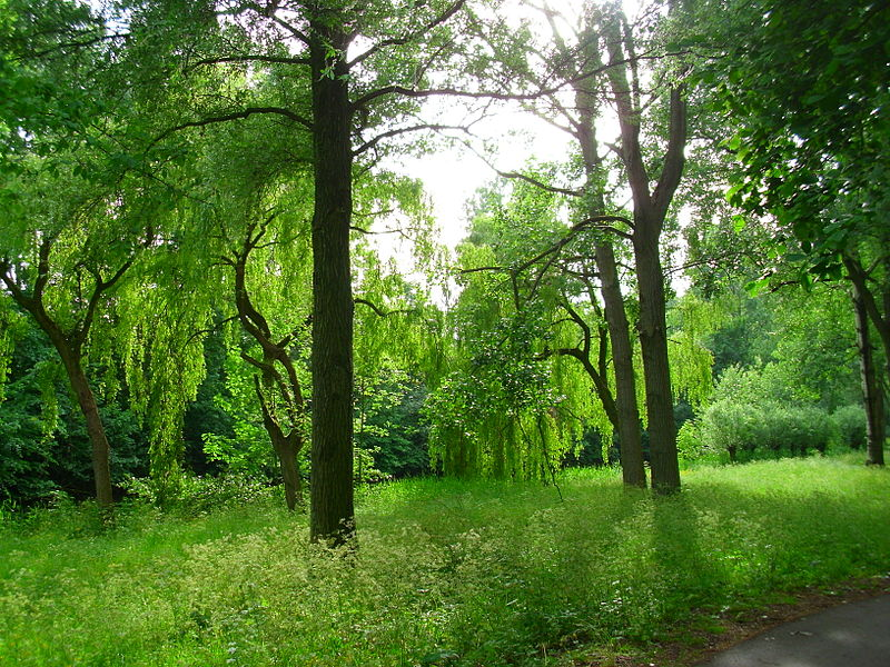 Manage your vicinity's greenery with an experienced arborist