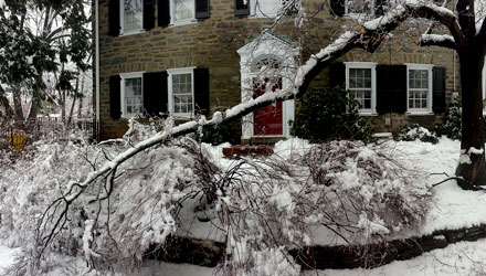 Protecting Trees From Winter Damage in Toronto