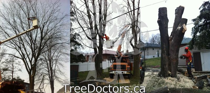 City of Toronto Tree Removal