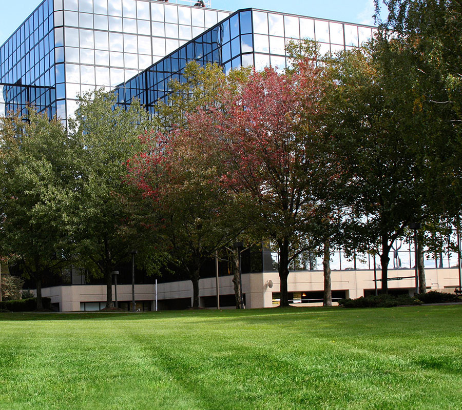Tree Doctors is a Reliable Commercial Grounds Care Provider that Everybody Can Trust