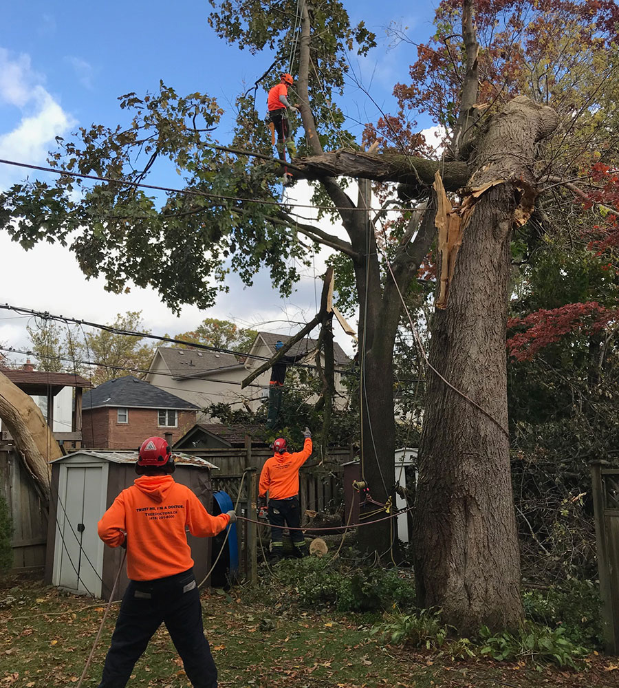 Emergency tree removal service Toronto