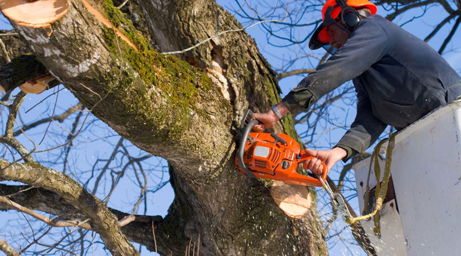 Highly professional arborists
