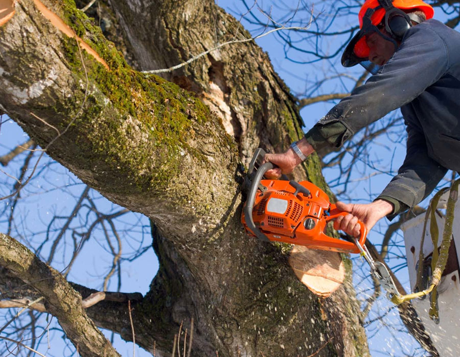tree services in Mississauga