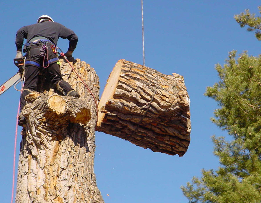 Tree care services in Mississauga