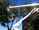 bucket-truck-tree-trimming-toronto