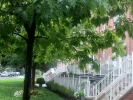 commercial-tree-trimming-in-toronto-tree-doctors