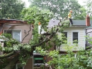 emergency-removal-of-a-large-dead-oak-in-toronto-01