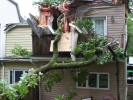 emergency-removal-of-a-large-dead-oak-in-toronto-02