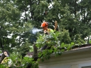 emergency-removal-of-a-large-dead-oak-in-toronto-11