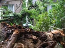 emergency-removal-of-a-large-dead-oak-in-toronto-12
