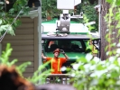 emergency-removal-of-a-large-dead-oak-in-toronto-13