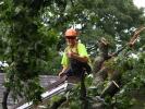 emergency-removal-of-a-large-dead-oak-in-toronto-14