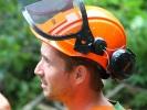 emergency-removal-of-a-large-dead-oak-in-toronto-16