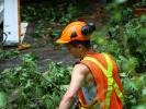 emergency-removal-of-a-large-dead-oak-in-toronto-18