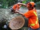 emergency-removal-of-a-large-dead-oak-in-toronto-20