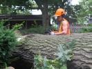 emergency-removal-of-a-large-dead-oak-in-toronto-21