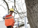 removal-of-a-huge-hollow-oak-in-toronto05