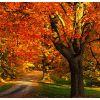 Fall Tree Care in Toronto