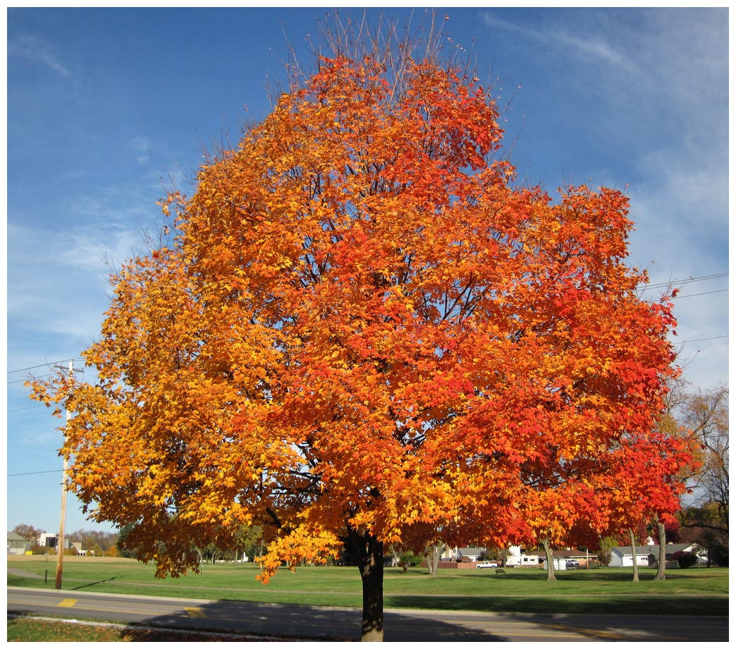 Top 10 Trees To Plant In Toronto
