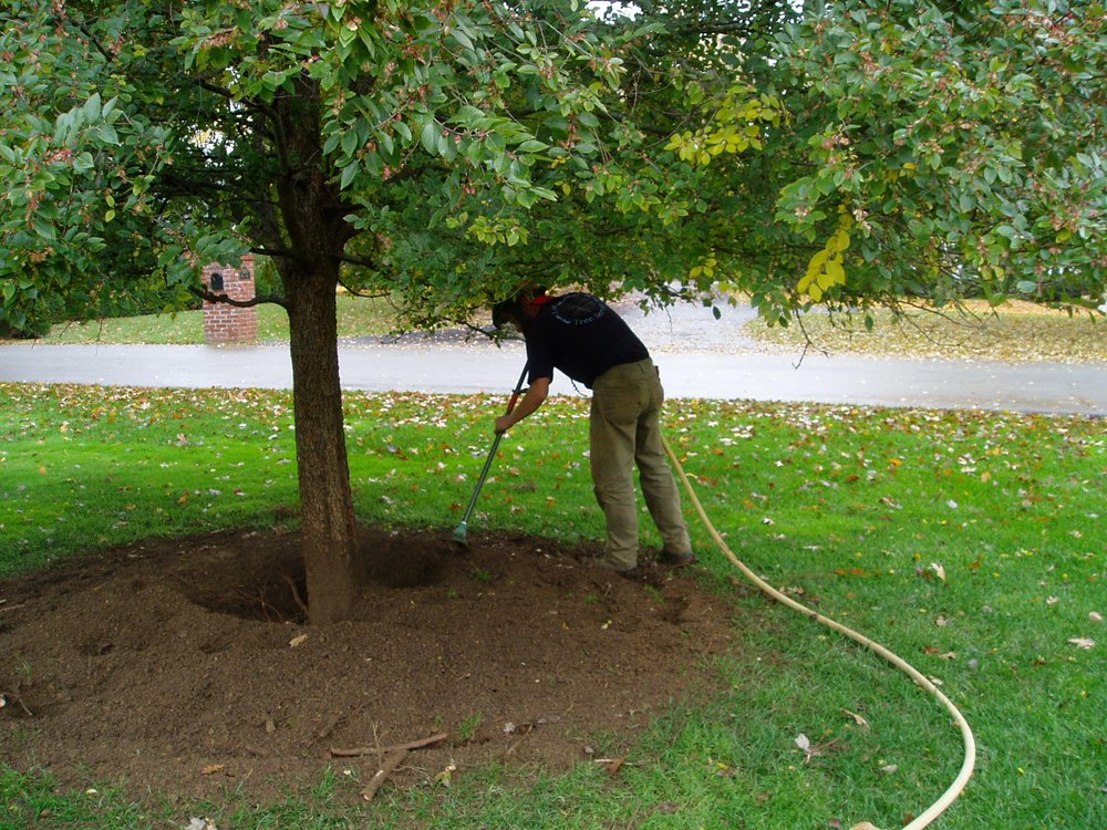Aerating Tree Roots