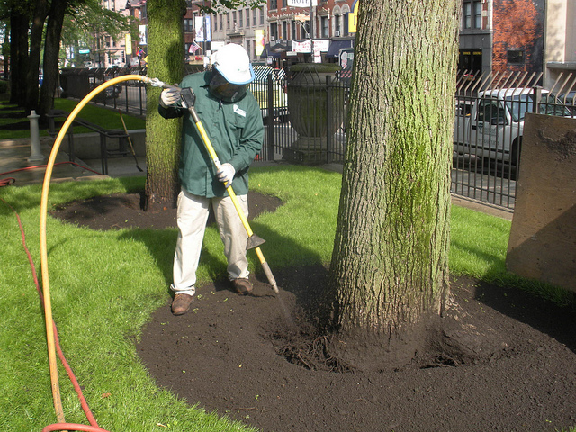 Air Spading Allows Arborists to Do their Work More Effectively