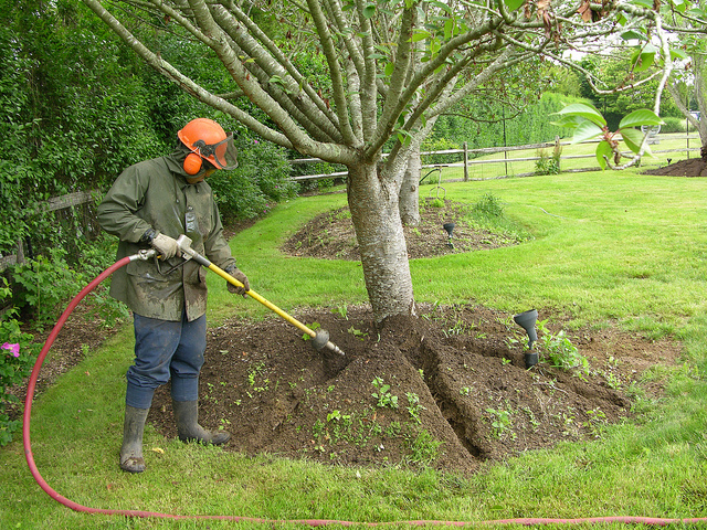 Air Spading for Trees Helps Arborists Save a Lot of Time