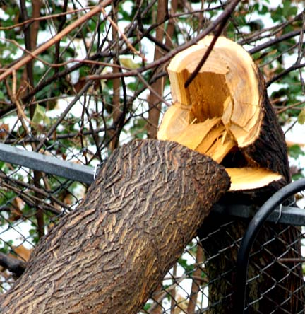 Arborist Reports and Consulting in Toronto