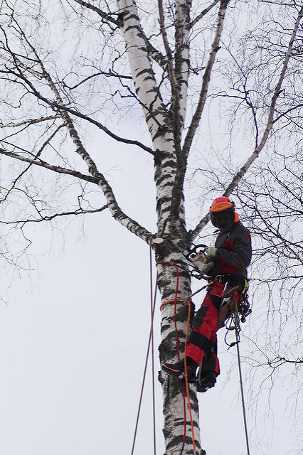 Ask Certified Arborists to Examine All of Your Trees Regularly