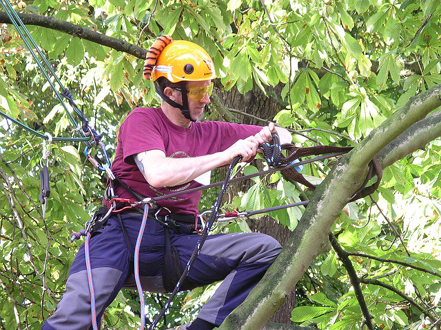 Ask Tree Care Experts for Tree Cabling and Bracing in Toronto