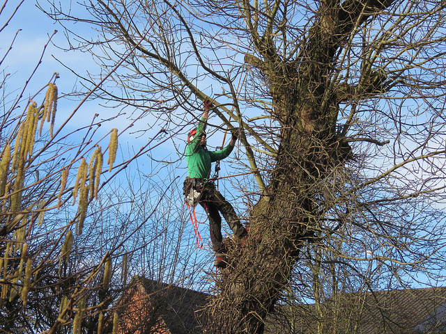 Ask an arborist for assistance if needed