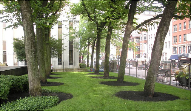 Benefits of Air Spading for Trees