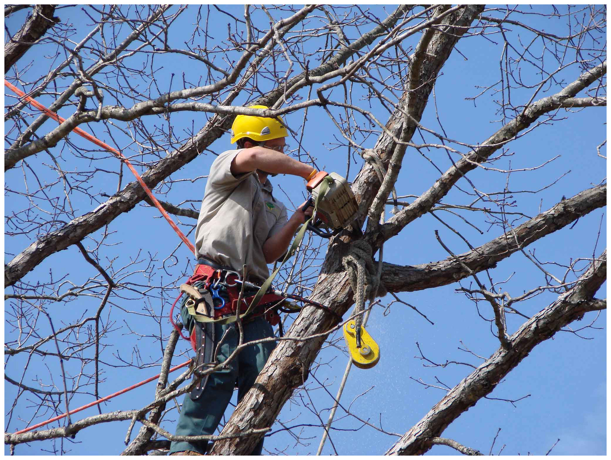 Benefits of Fall Tree Pruning