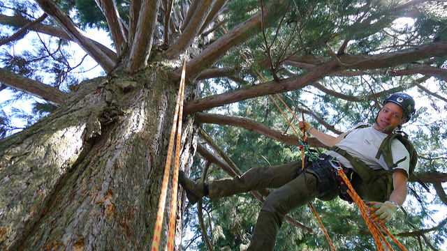 Benefits of Using Tree Care Services Provided by Tree Doctors