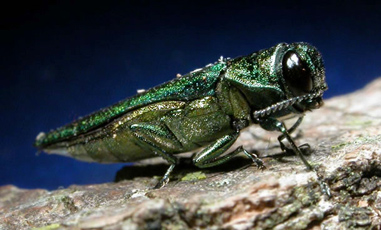 Common Pests of Trees in Toronto