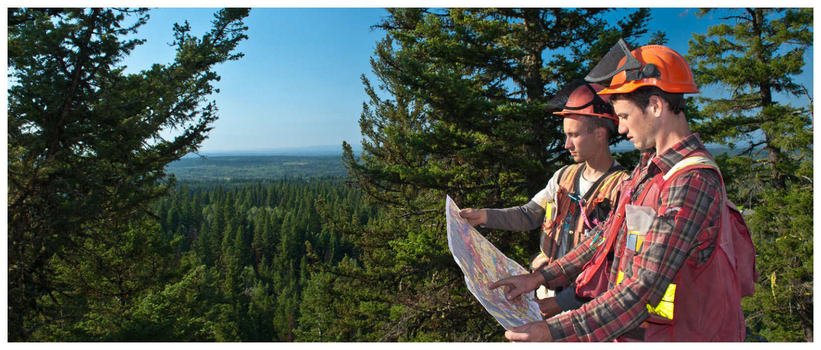 Contact Tree Doctors for a Forest Management Plan in Ontario