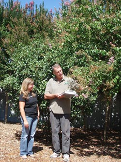 Contact Tree Doctors for an Arborist Reports and Consulting in Toronto