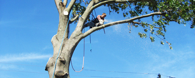 Don't Remove Trees on Your Own – Always Ask Professionals for Help!